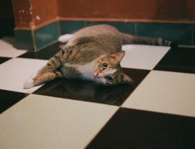 chat couché sur le carrelage dans une cuisine