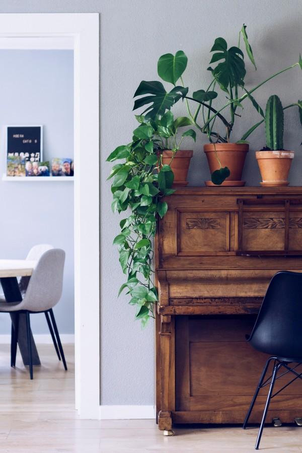 meuble en merisier avec des plantes dessus